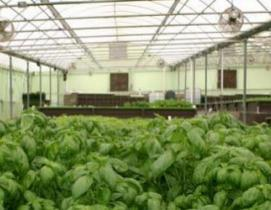 Aquaponics: reinventing the playbook for solving homelessness in Smart Cities