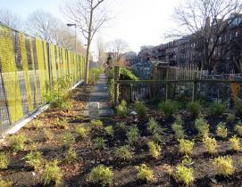 urban farming in smart cities