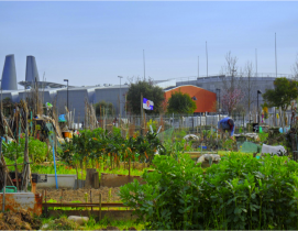 urban farming in florence