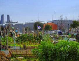 urban farming in florence